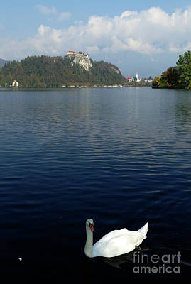 Photograph - Swan Lake - Bled - Slovenia by Phil Banks