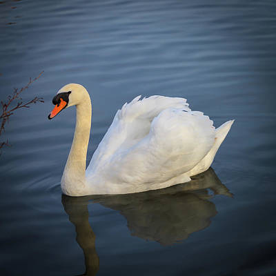 Photograph - Swan Lake by Mike Molloy Photo