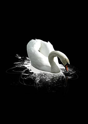Photograph - Swan On A Black Lake by Photography By Paul Hollingworth