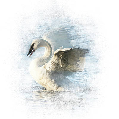 Photograph - Swan Square #1 - Morning Display by Patti Deters