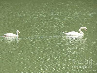Wall Art - Photograph - Swans  by Cybele Chaves