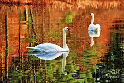 Photograph - Swans by Debbie Stahre