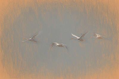 Watercolor Butterflies - Swans Flying Leonardo da Vinci by David Pyatt