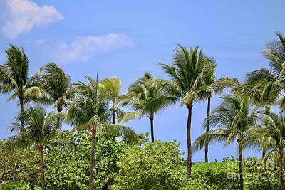 Photograph - Swaying Palm Trees by Carol Groenen