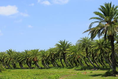 Route 66 - Swaying Palms by Anne Taylor