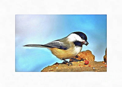 Photograph - Sweet Chickadee by Elaine Manley