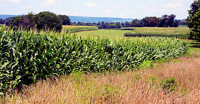 Photograph - Sweet Corn Heaven In Pennsylvania by Paul W Faust - Impressions of Light