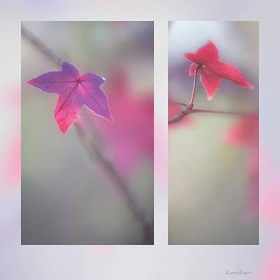 Photograph - Sweet Gum by Karen Rispin