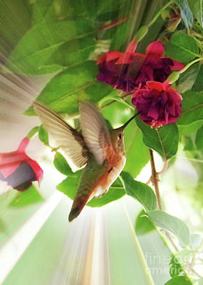 Photograph - Sweet Hummingbird Glow by Carol Groenen