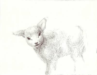 Drawing - Sweet Little Lamb  by Nicola Jeanette Cochran