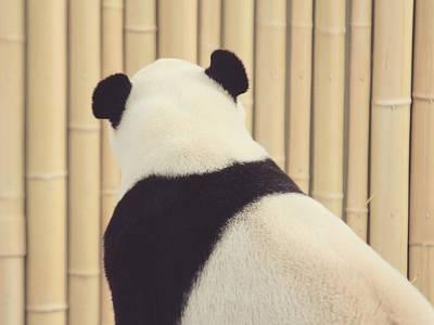 Photograph - Sweet Panda by The Art Of Marilyn Ridoutt-Greene