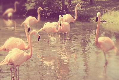 Photograph - Sweet Pink Flamingos by The Art Of Marilyn Ridoutt-Greene