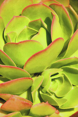 Photograph - Sweet Succulents I by Leda Robertson