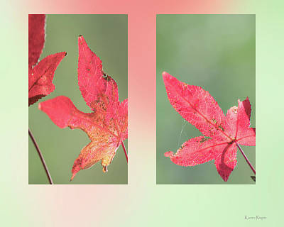 Photograph - Sweetgum Leaves by Karen Rispin