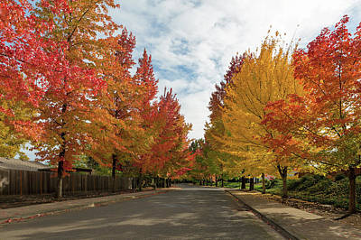 Wall Art - Photograph - Sweetgum Trees Foliage Lined Street During Fall Season by David Gn