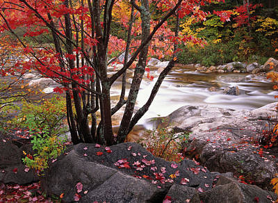 Photograph - Swift River Near Rocky Gorge, White by Tim Fitzharris/ Minden Pictures