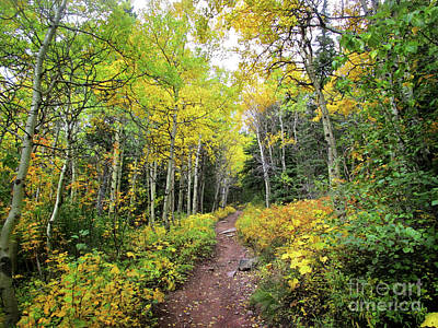 Catch Of The Day - Swiftcurrent Pass Trail Fall Color Yellow Aspen 2 - Glacier National Park by Bruce Lemons