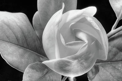Photograph - Swirling Scents Black And White by JC Findley