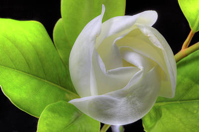 Photograph - Swirling Scents by JC Findley