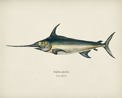 Painting - Swordfish  Xiphias Gladius  Illustrated By Charles Dessalines   D Orbigny  1806 1876  by Celestial Images