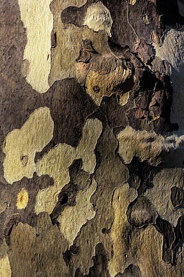 Photograph - Sycamore Bark by Robert Ullmann