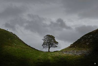 Photograph - Sycamore Gap by John Meader