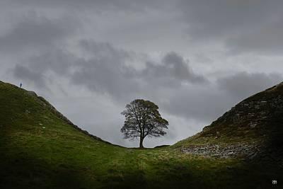 Photograph - Sycamore Gap by John Meader