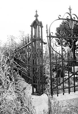 Photograph - Sylvester in Cemetery by Sandra Dalton
