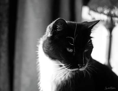Photograph - Sylvester by Sandra Dalton
