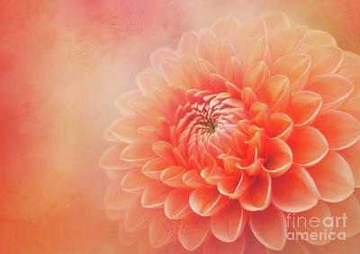 Modern Man Surf Royalty Free Images - Sylvia - A Glorious Orange Dahlia Royalty-Free Image by Anita Pollak