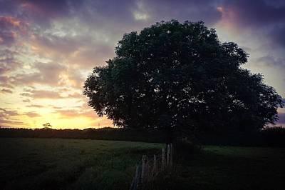 Photograph - Symme Tree Sunrise by Samuel Pye