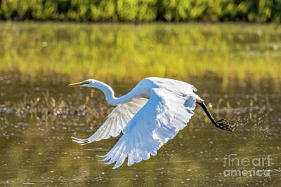 Photograph - Take Off by Craig Leaper
