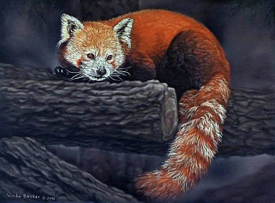 Takeo, The Red Panda Art Print