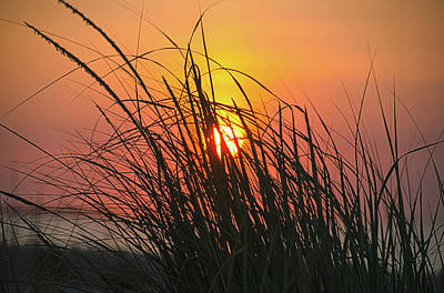 Photograph - Tall Grass At The Beach Sunrise by Bill Cannon