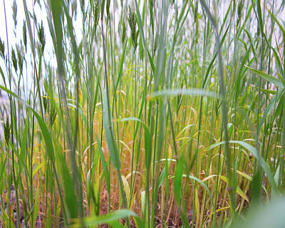 Photograph - Tall Grass In Herat by SR Green