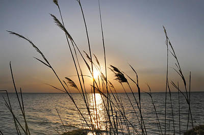 Photograph - Tall Grass In The Sunset by Bill Cannon