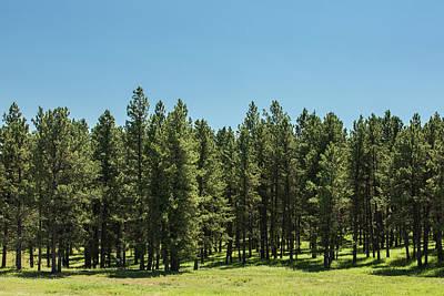 Photograph - Tall Trees by Todd Klassy