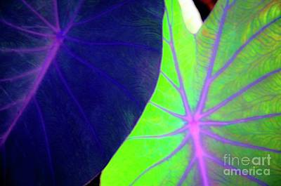 Photograph - Taro Leaves - Hawaii Plants And Flowers by D Davila