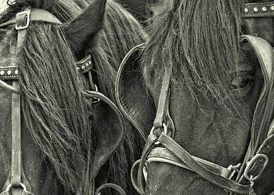 Photograph - Teamwork Together by JAMART Photography