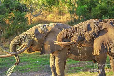 Photograph - Tembe Elephant Park by Benny Marty