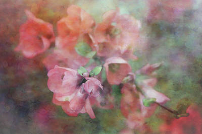 Not Your Everyday Rainbow - Tender 9126 IDP_4 by Steven Ward
