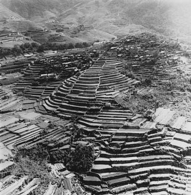 Photograph - Terraced Farming by Three Lions