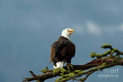 Photograph - Territorial by Beve Brown-Clark Photography