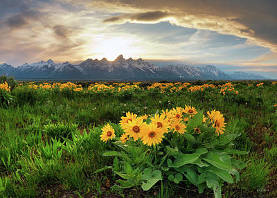 Photograph - Teton Spring 2 by Leland D Howard