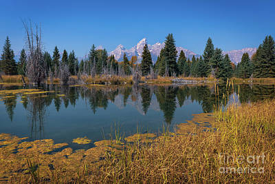 Photograph - Tetons Majesty by Doug Sturgess