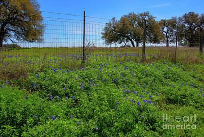 Moody Trees - Texas Bluebonnets by Kelly Wade