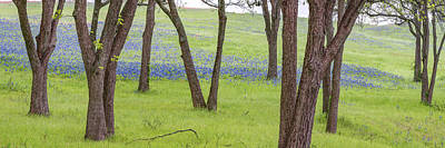 Royalty-Free and Rights-Managed Images - Texas Field of Bluebonnets Panoramic Landscape - Ennis Texas by Gregory Ballos