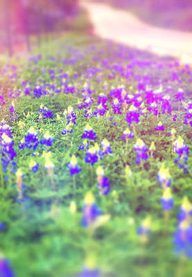 Photograph - Texas Hill Country Bluebonnets by Dan Sproul