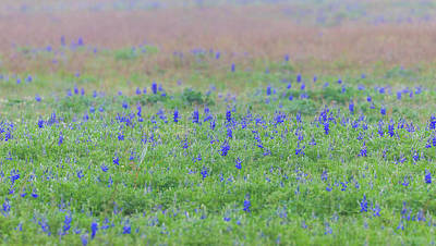 Photograph - Texas Spring Bluebonnets by Dan Sproul