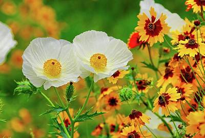 Photograph - Texas Wildflowers by Lynn Bauer